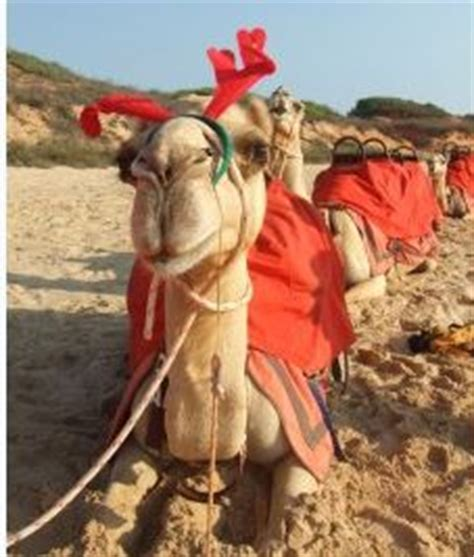 this christmas syrian children hope for a camel not a