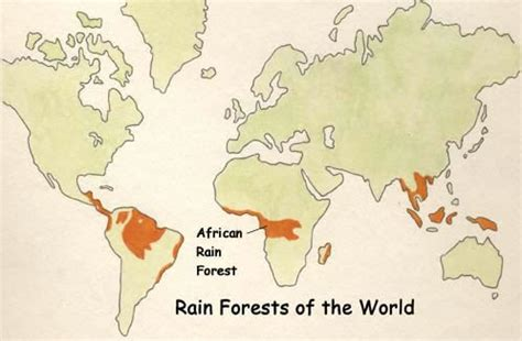 all tropical rainforests animals search results insectanatomy african rainforest