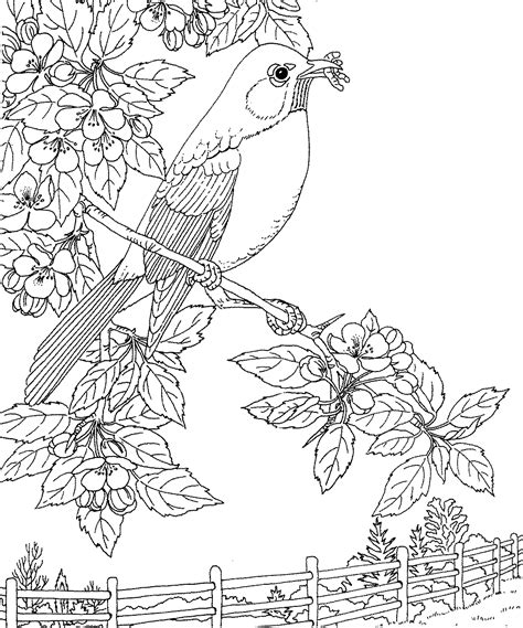 robin bird coloring pages qlyview com