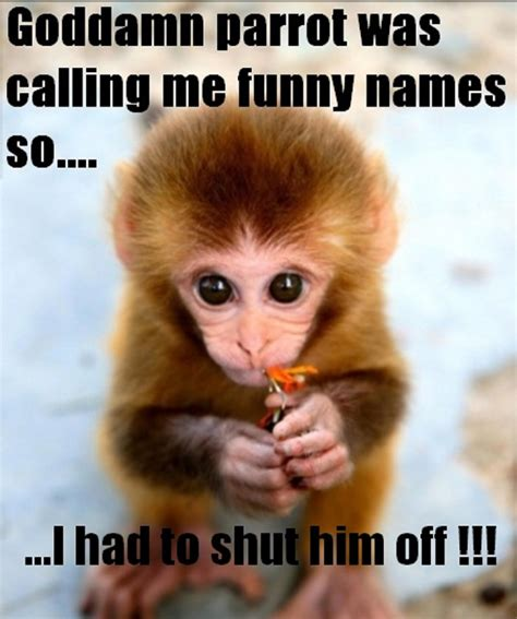 Funny Monkey Memes - hd funny memes images best images collections hd for