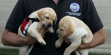 adopt a tsa pup the bark - Puppy Giveaway Near Me