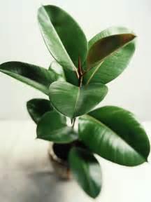 easy to grow indoor plants 5 easy indoor plants to start with indoor gardening indianhomemakeover com
