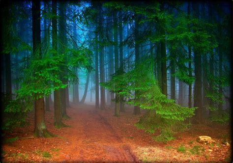imagenes de paisajes naturales bosques unique wallpaper 24 fotograf 237 as de paisajes naturales del