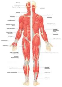 wie schließe ich eine le an muskel aus dem gesundheitslexikon gesundheit medizin
