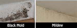 mold in bathroom health symptoms and simple solutions to rid your home of mold and