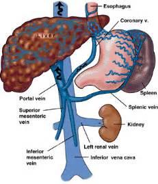 giyabradiology portal vein inferior vena cava