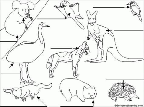 coloring pages australian animals label australian animals enchantedlearning 533791 194