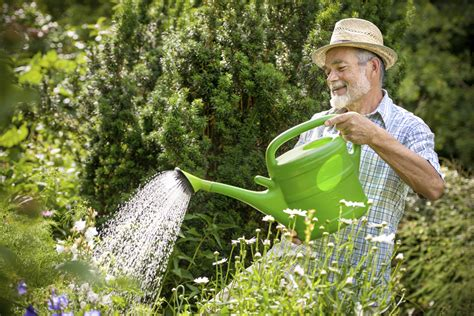 Watering Garden by When Should I Water Plants The Veggie
