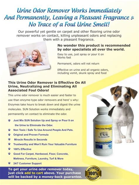 how to remove urine smell from couch com professional grade dog and cat urine stain