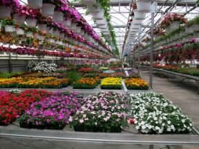 barone gardens cicero new york greenhouse cicero ny