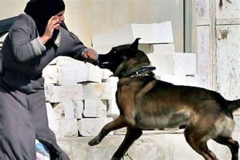 islam and dogs excellent another anti islam republic politician urges to walk