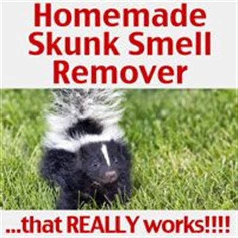 why does my house smell like skunk 1000 ideas about skunk smell remover on pinterest skunk