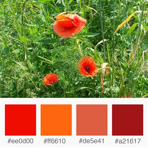 poppy flower colors weekly colours inspiration poppy flower shades of