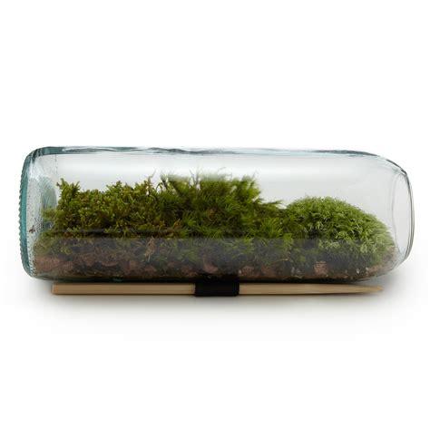 moss terrarium bottle the green head