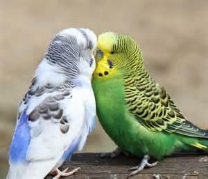 best pet birds for kids