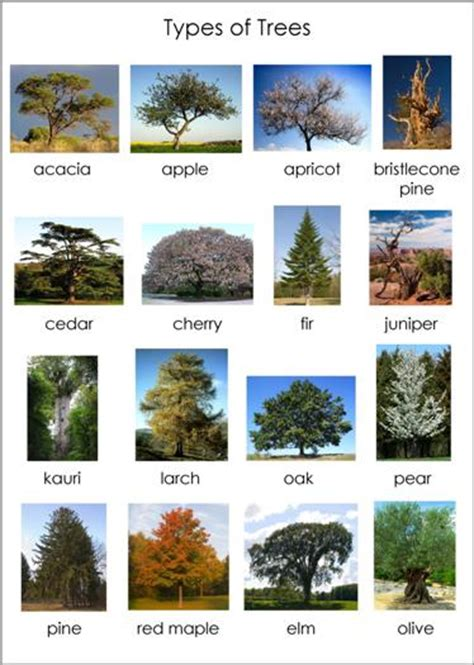 type of trees montessori for everyone blog