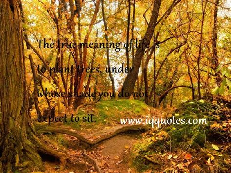 The Forest Would Be A Place Quote Forest Quotes And Sayings Quotesgram