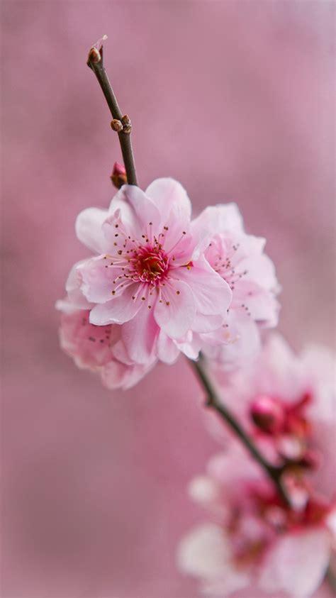 pink flower wallpapers desktop background outdoors