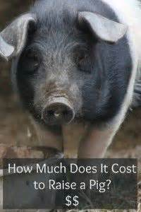 raising pigs and graphics on pinterest
