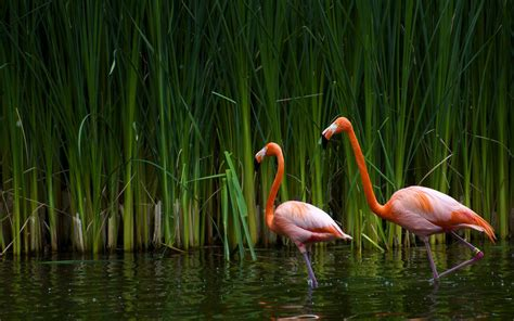 wallpaper with pink flamingos flamingo wallpapers wallpaper cave