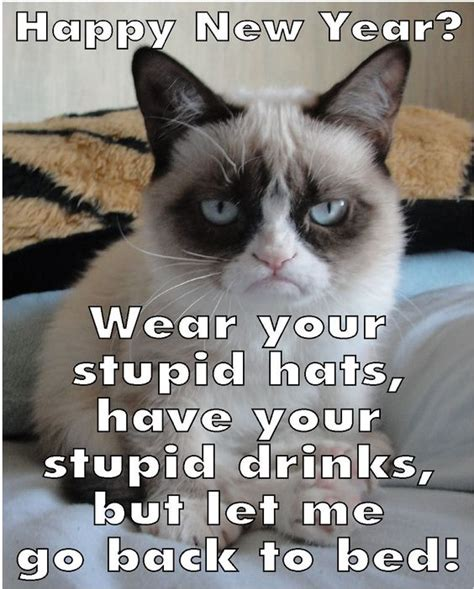 grumpy cat new year grumpy cat new year s and cats on