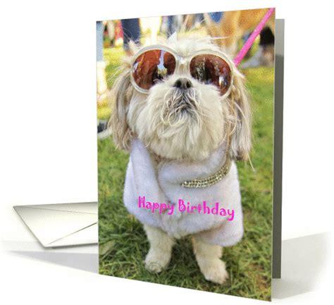 Shih Tzu Birthday Card Dressed Up Glamor Pooch Shih Tzu Dog Birthday Card 1285436