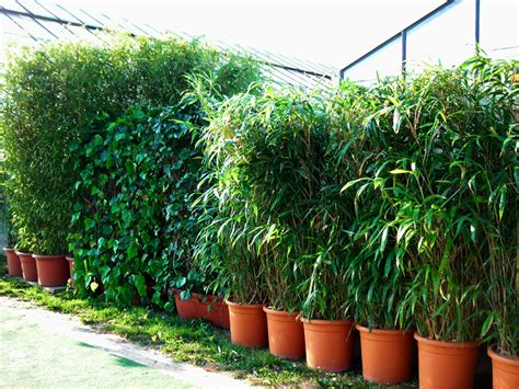 sichtschutz garten deko sichtschutz pflanzen immergr 252 n sichtschutz pflanzen