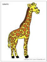 what color is a giraffe giraffe printable templates coloring pages