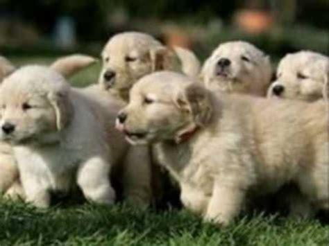 fuzzy puppies fuzzy puppies