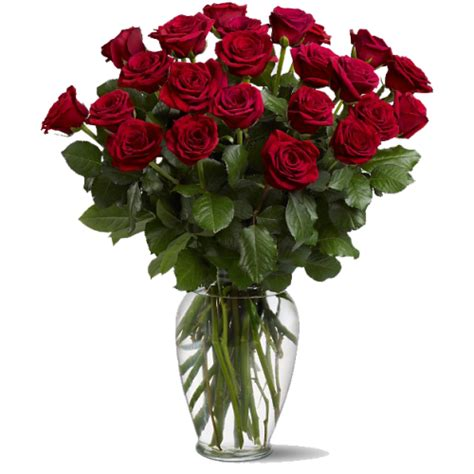 A Vase Of Roses by 2 Dozen Roses In A Vase