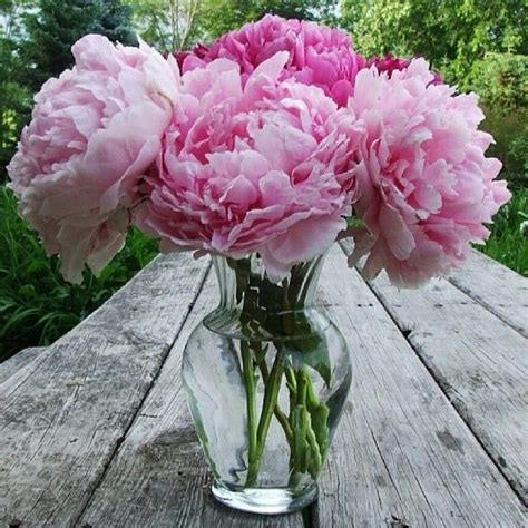 Diy Wedding Vases Vase Of Peonies Pictures Photos And Images For Facebook