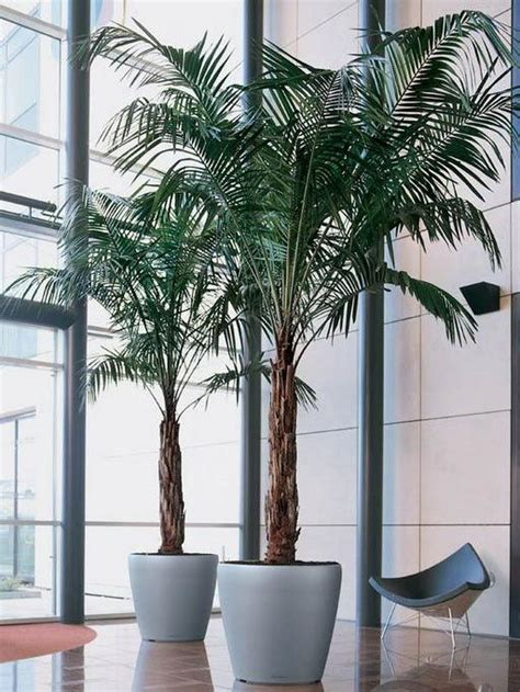 house plants uk for sale best 25 house plants for sale ideas on