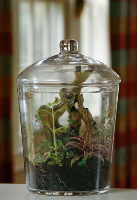 Pot Terrarium Vas Terrarium Aquarium Kaca Mini Garden Miniature 1 terrariums miniature gardens glass houston chronicle