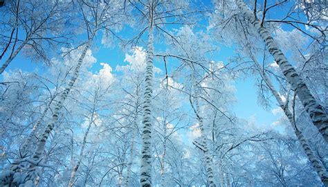 imágenes de invierno para whatsapp encuentra muchas de fotos de invierno para fondo de