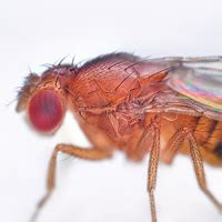 why do i have fruit flies in my bathroom biology medicine future timeline blogs technology