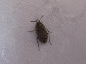insectes non identifi 233 s dans ma