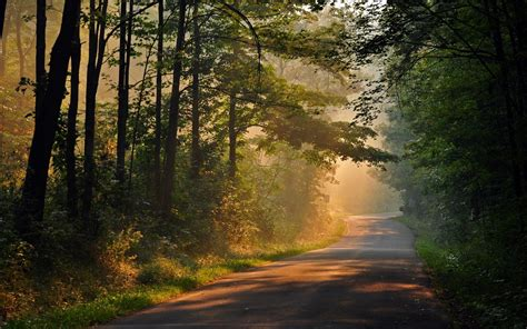 wallpaper hd nature full screen nature tree tree leaves path track sun rays day trees