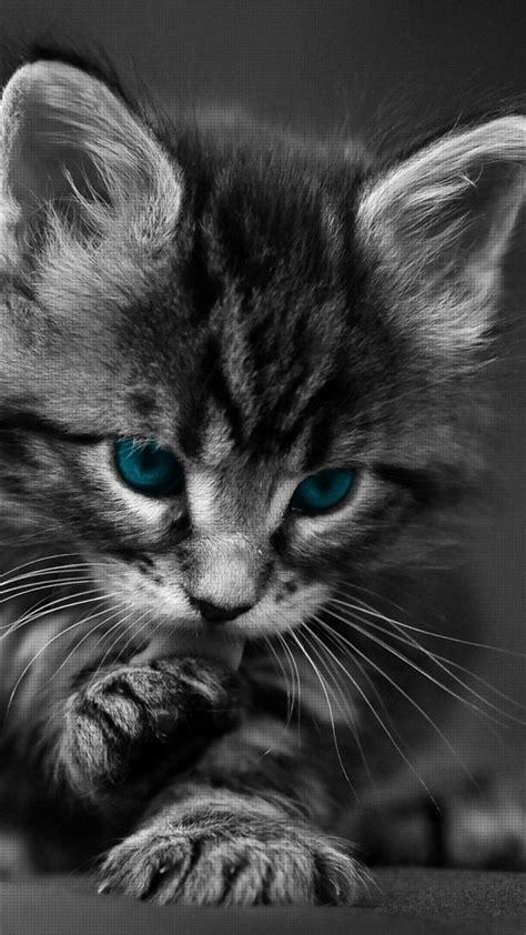 cat wallpaper for mobile hd black cat cute wallpaper 123mobilewallpapers com