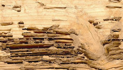 termite signs how to detect termite infestation before