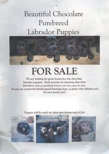 puppy for sale flyer templates pin for sale flyer free word template on