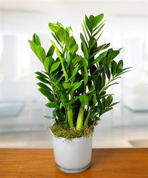 common house plants houseplant appreciation day the benefits of houseplants currans flowers