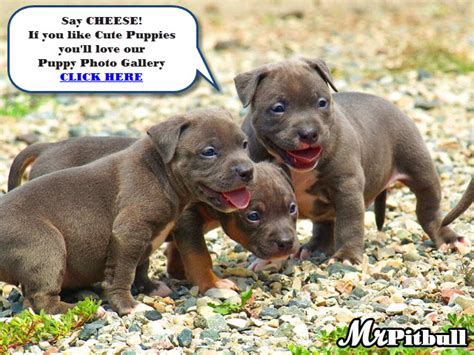 best food for pitbull puppies to gain weight weight gain