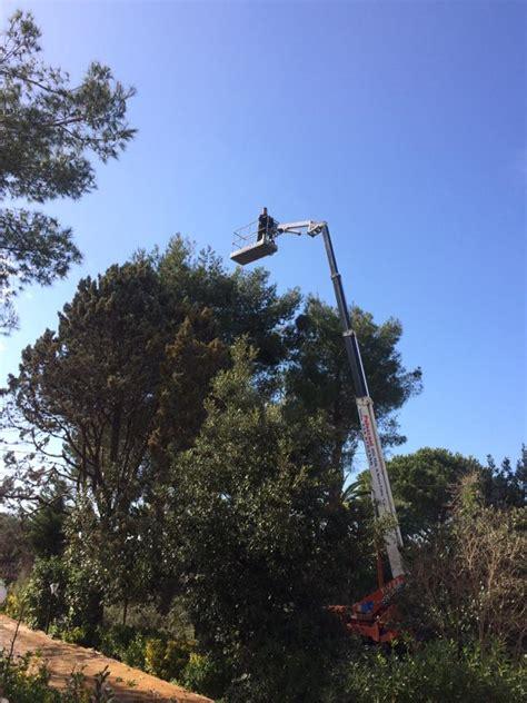 alberi alto fusto da giardino piante alto fusto da giardino dracaena marginata with