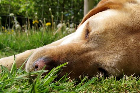can dogs get cancer preventing skin cancer in dogs healthy paws