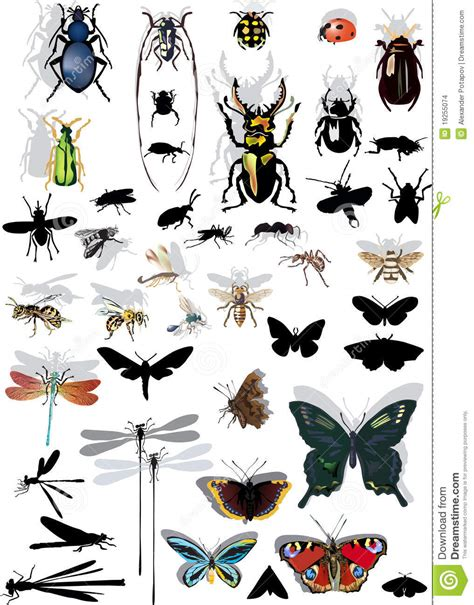Ensemble D Insectes D Isolement Avec Des Ombres