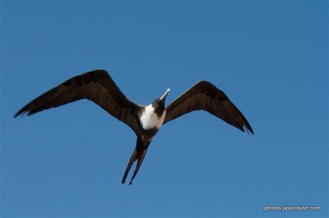 birds in flight and water jason dunn