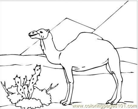 coloring pages camel in desert coloring page animals