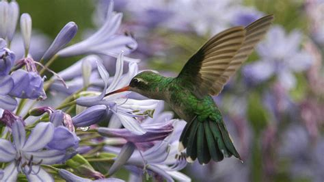 plants that attract hummingbirds southern living