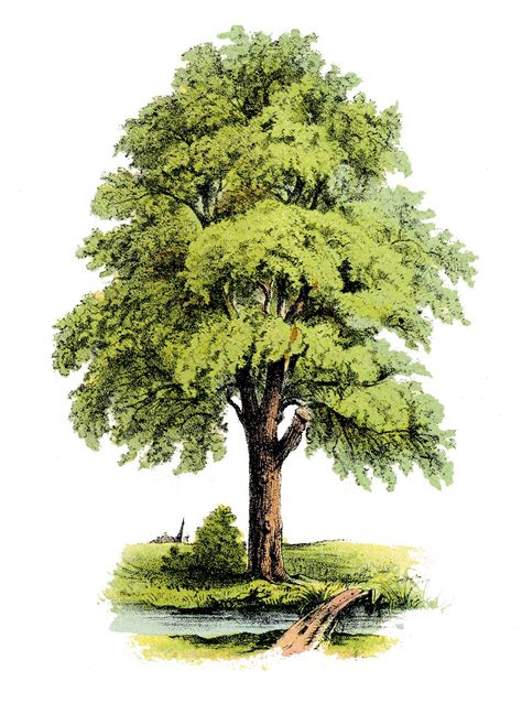 Egg Tree Fruit - antique clip art image lovely green tree the graphics fairy
