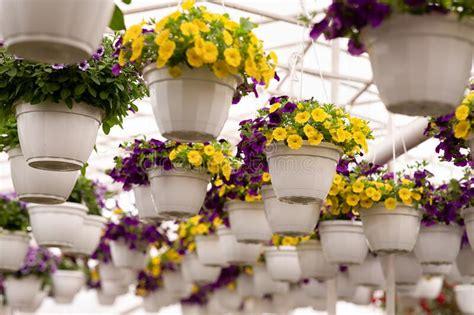 indoor gardening  home greenhouse planting herb